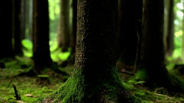 moody forest szene pan, nahaufnahme - naturwald stock-videos und b-roll-filmmaterial