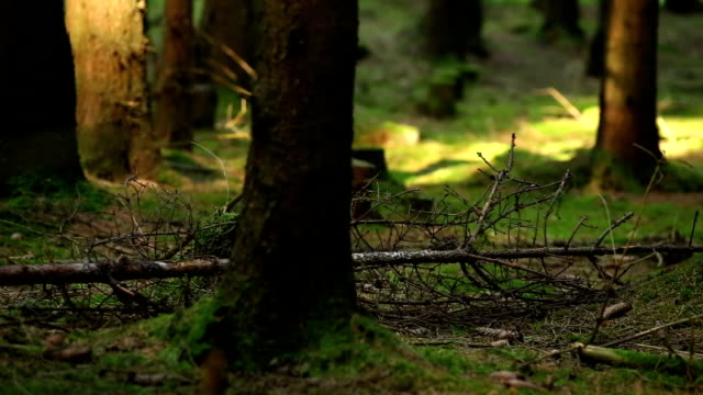 moody forest scene close-up - dead plant stock videos & royalty-free footage