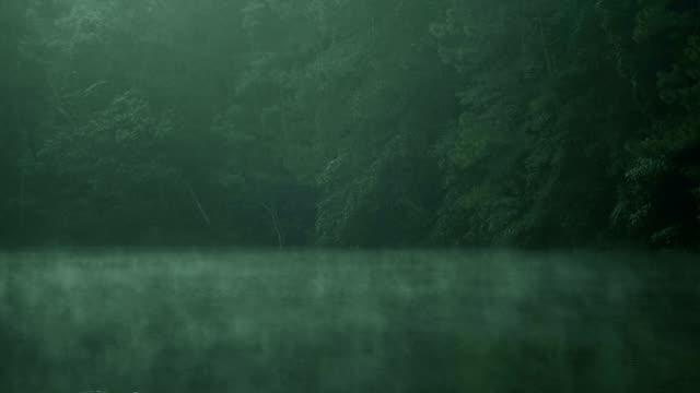 lynnig grönskande skogen - tonad bild bildbanksvideor och videomaterial från bakom kulisserna