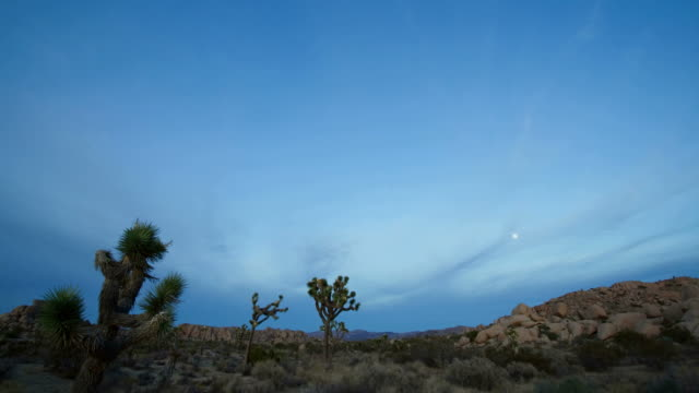 t/l, ws, pan, moody sky above desert landscape, day to night, joshua tree national park, california, usa - joshua tree national park stock videos & royalty-free footage