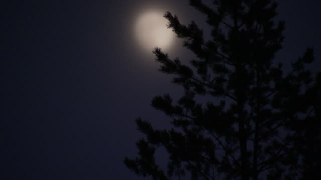 a moon a tree in the night sweden. - spruce stock videos & royalty-free footage
