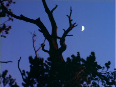 vídeos y material grabado en eventos de stock de moon above silhouette of bare tree - bare tree