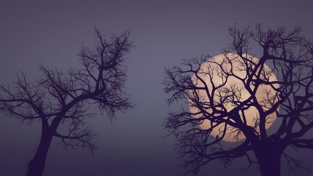 luna e alberi morti - albero spoglio video stock e b–roll