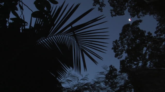 la ms moon and night sky through silhouettes of rainforest trees/ manu national park, peru - copertura di alberi video stock e b–roll