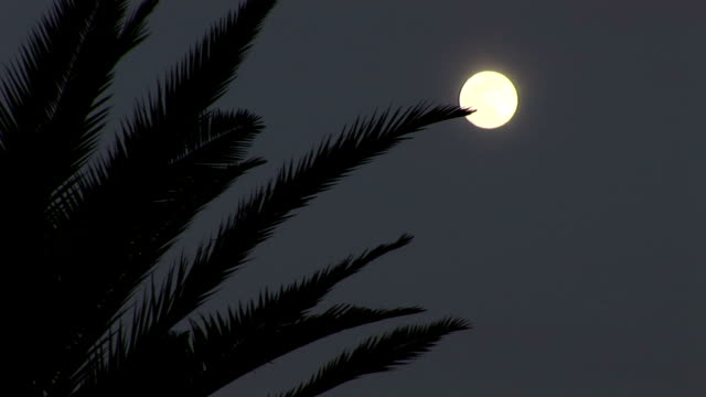 Moon and palm tree in the night
