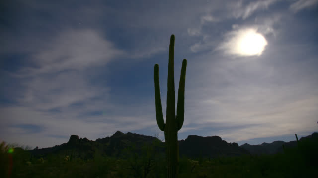 TIME LAPSE WIDE SHOT moon and stars over organ pipe cactus in desert, Organ Pipe National Monument, Sonoran Desert, Arizona