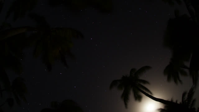 tl moon and stars over palm trees - coconut palm tree stock videos & royalty-free footage
