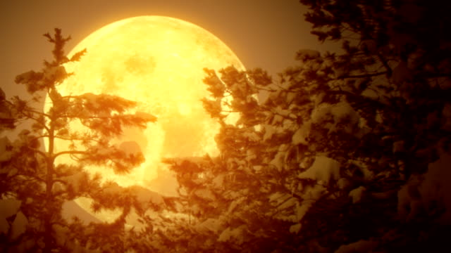 moon and swaying pine trees with snow (loopable) - dreamlike stock videos & royalty-free footage