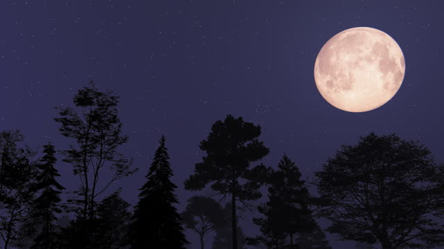 moon and trees - fantasy stock videos & royalty-free footage