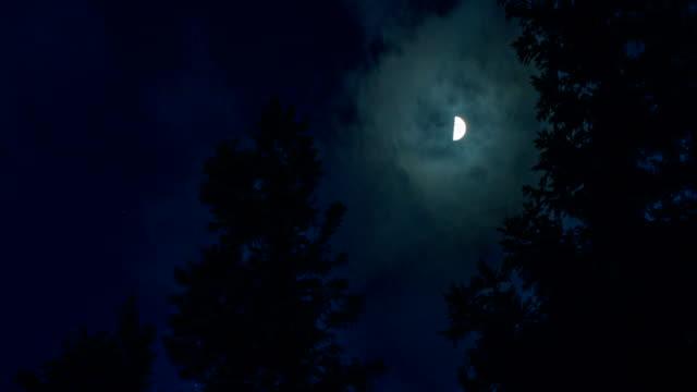 vídeos y material grabado en eventos de stock de moon en la noche - vampiro