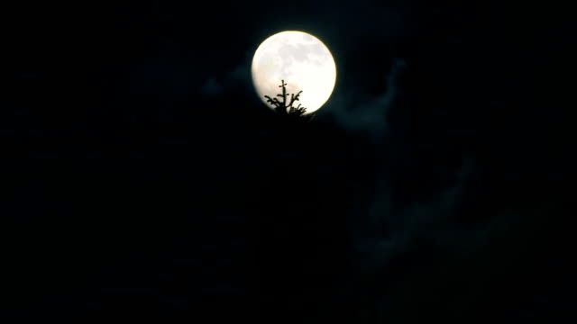 moon in the forest - full moon stock videos & royalty-free footage