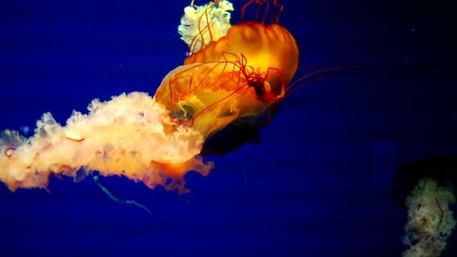 4 k ミズクラゲの水槽で - 発光色点の映像素材/bロール