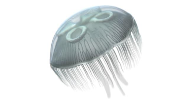vidéos et rushes de lune méduse natation sur le blanc - objet ou sujet détouré