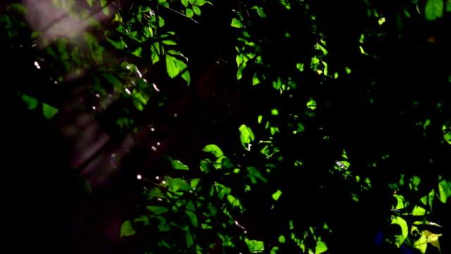 luce di luna con nebbia su sfondo di albero - flora lussureggiante video stock e b–roll