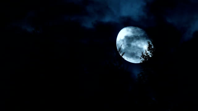 moon moving behind trees - woodland stock videos & royalty-free footage