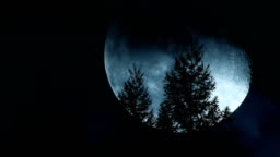 Moon Moving Behind Trees