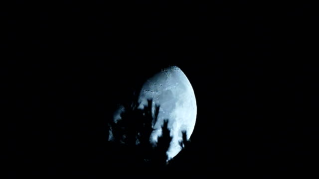 moon over trees - full moon stock videos & royalty-free footage