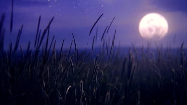 Moon over wheat field