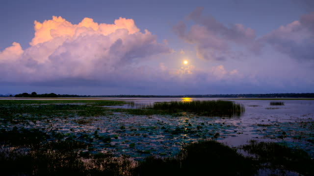 moon rise over coastal wetlands of southern sri lanka - biodiversity stock videos & royalty-free footage