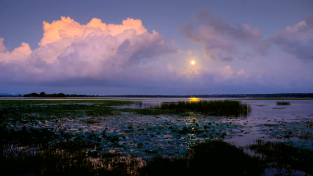 vídeos y material grabado en eventos de stock de la luna se eleva sobre los humedales costeros del sur de sri lanka - campo de arroz