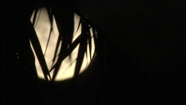 Moon rises behind palm fronds, Fakarava Atoll, French Polynesia