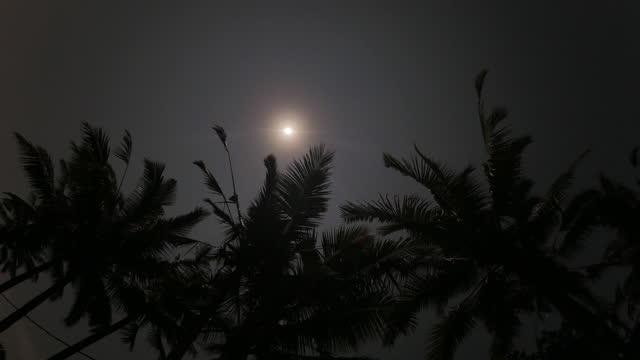 moon scenery with palm trees in ubud district / bali, indonesia - ubud district stock videos & royalty-free footage