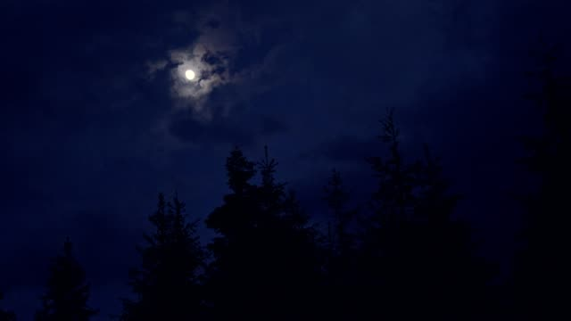 moon shining above spruce trees - full moon stock videos & royalty-free footage