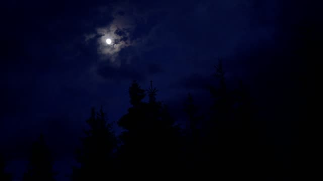 moon shining above spruce trees - navy blue stock videos & royalty-free footage
