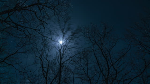 moon time lapse - bare tree stock-videos und b-roll-filmmaterial