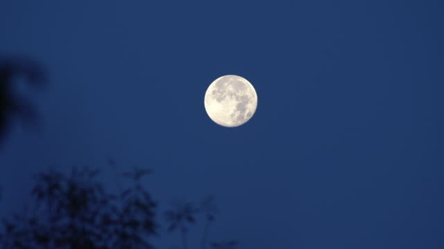 moon - full moon stock videos & royalty-free footage