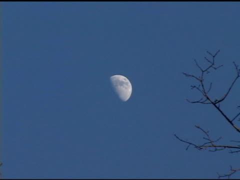 moon - half moon stock videos & royalty-free footage