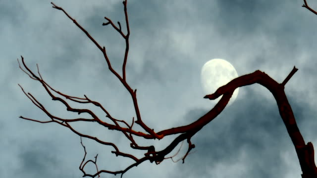vídeos y material grabado en eventos de stock de moon with eerie tree branch and dark clouds passing quickly - árbol latente