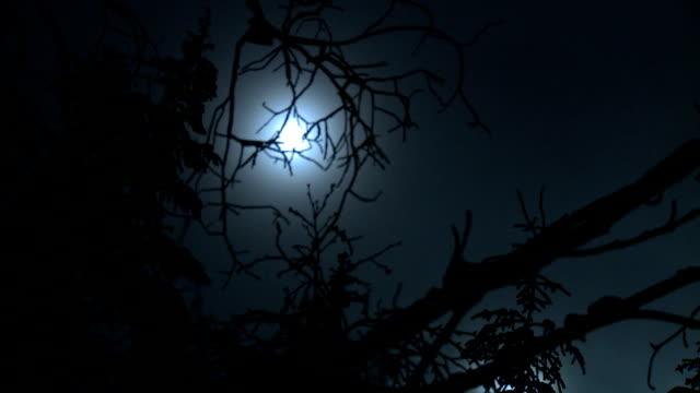 Mond mit Gnarled Bäume in den Vordergrund HD