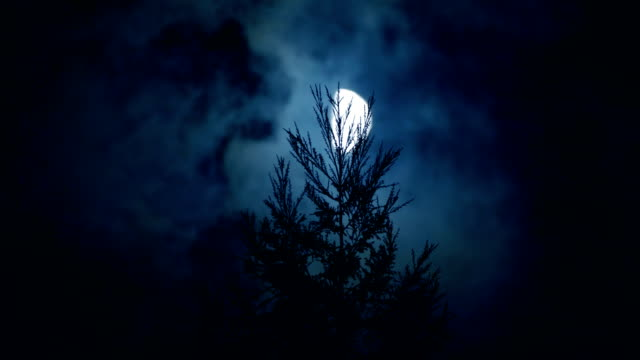 moon with pines at nigh - forest stock videos & royalty-free footage