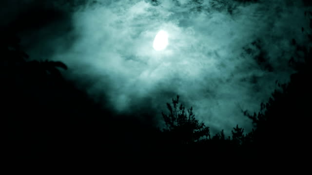 moon with tree at night - horror stock videos & royalty-free footage