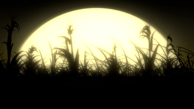 moonlight breeze in corn field - corn cob stock videos & royalty-free footage
