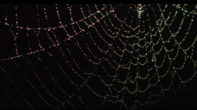 Moonlight glows on a wet spiderweb. Available in HD.