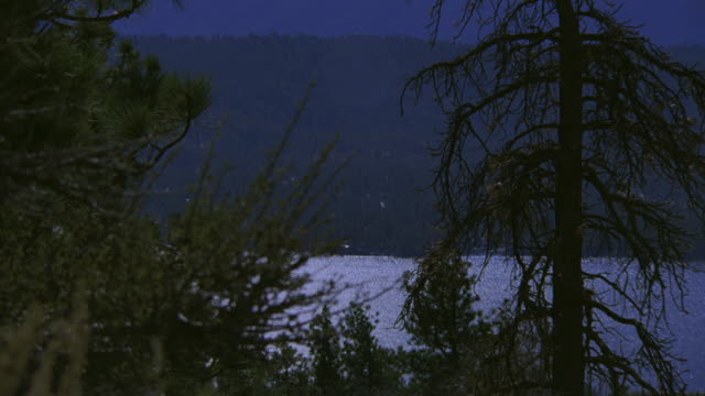 vídeos de stock e filmes b-roll de ws moonlit lake with pine trees in the foreground - árvore de folhas perenes