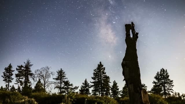 moonlit mount laguna milky way timelapse with pine trees - president stock videos and b-roll footage