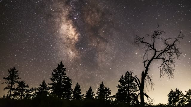 moonlit mount laguna milky way timelapse with pines and oak tree - 国有林点の映像素材/bロール