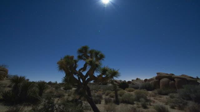 T/L, MS, Moonset above desert landscape, Joshua Tree National Park, California, USA