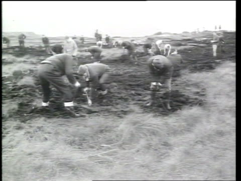 pauline reade funeral mat oct 1965 yorkshire moor ms police digging moor in search for saddleworth bodies ms two men digging moor - moor stock videos & royalty-free footage