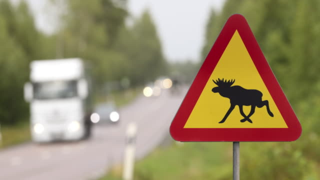 moose warning sign at a highway - road warning sign stock videos & royalty-free footage