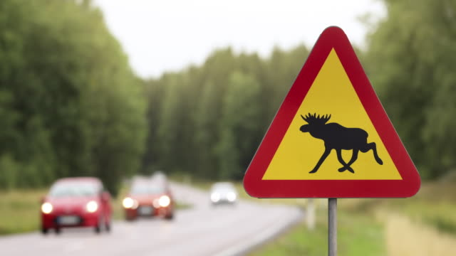 moose warning sign at a road through a forest - road warning sign stock videos & royalty-free footage