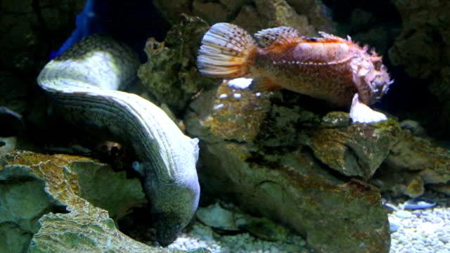 Muräne und Steinfische in Natur und Meer Leben tief unter Wasser