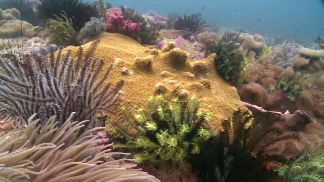 Moray eel hiding under coral