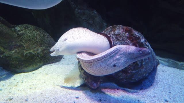Moray Eel in deep underwater nature and sea life