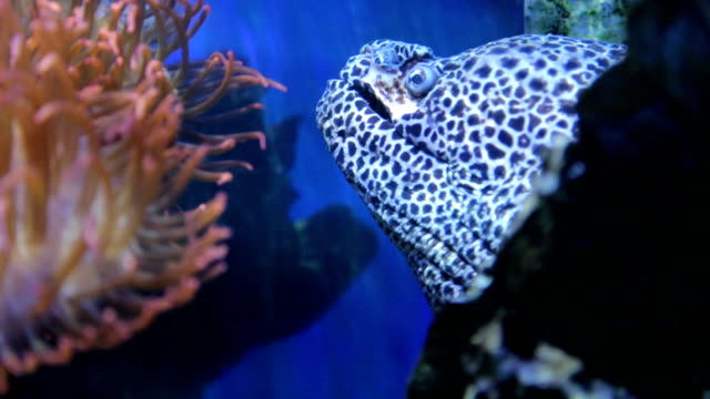 moray eel in deep underwater nature and sea life - moray eel stock videos and b-roll footage