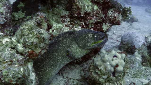 moray eel - saltwater eel stock videos & royalty-free footage