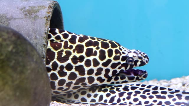moray eel - moray eel stock videos & royalty-free footage